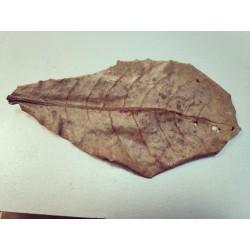 Лист миндаля