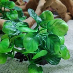 Анубиас пластиковый 9 на 9 см