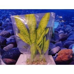 Шелковое растение 30 см